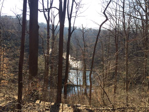 winter trees in the wissahickon