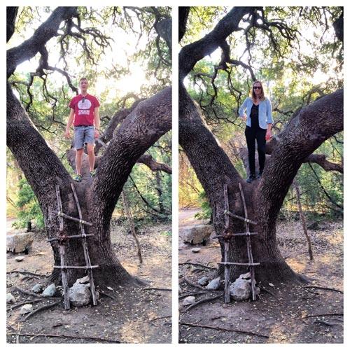 barton creek wilderness park tree ladder