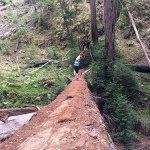 a woman walking across a fallen tree