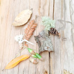 an assortment of leaves and pinecones