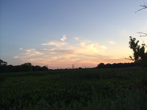 the sunsetting and getting darker over the marshy land