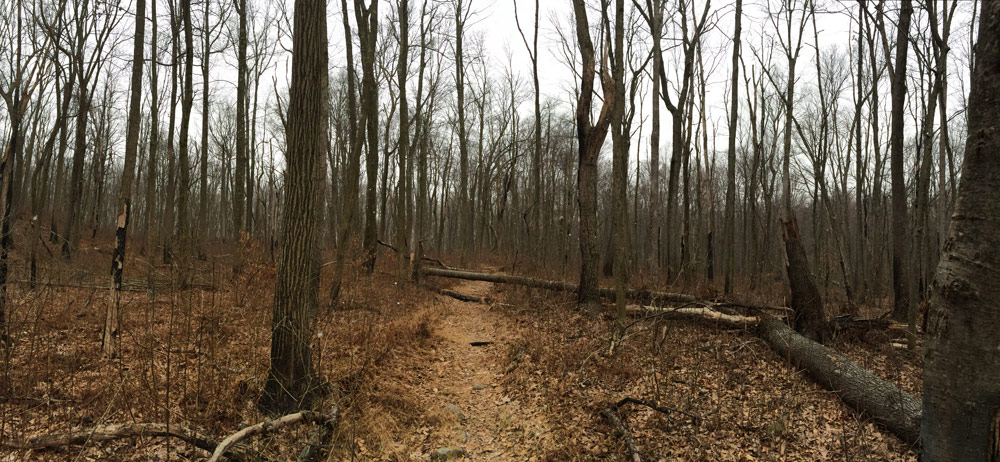 a tree fallen in the trail