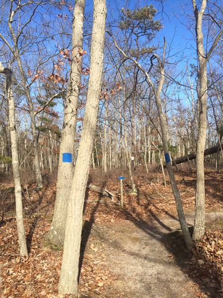 a trail with too many blue blazes