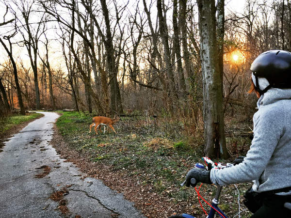 a woman on a bike with deer on the trail
